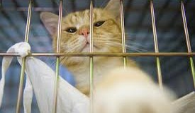 Manager suspects tenant's 'companion animal' is just a pet